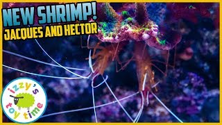 NEW CLEANER SHRIMP! Izzy's Toy Time Reef Tank NEW ADDITIONS