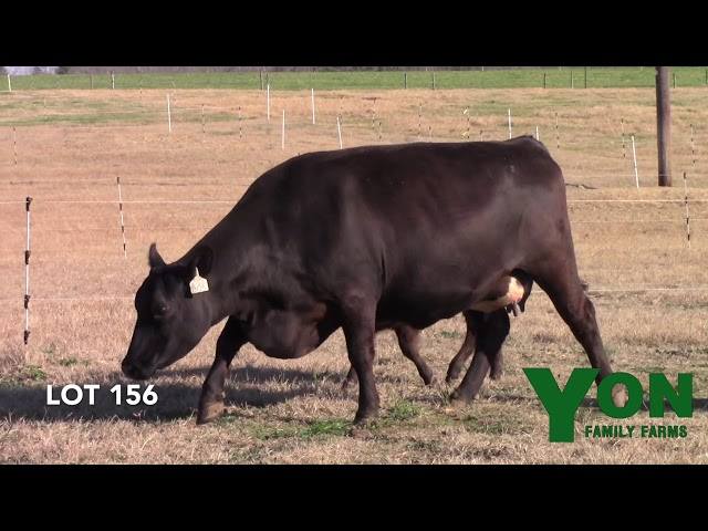 Yon Family Farms Lot 156
