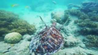 green island snorkeling cairns qld great barrier reef australia