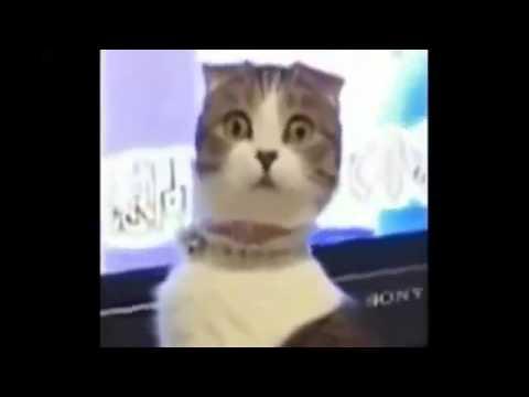 chats dr les de nouvelles chats dr les vid os dr les d 39 animaux dr le de vignes vid os youtube. Black Bedroom Furniture Sets. Home Design Ideas