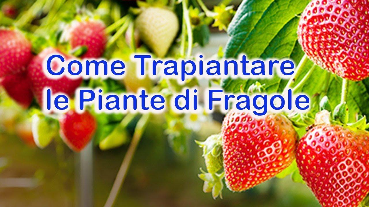 Congelare le fragole - Cucina Serafina