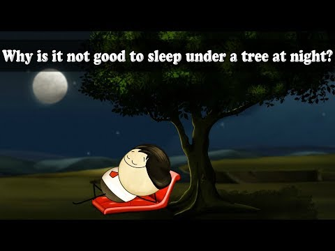 Respiration - Why is it not good to sleep under a tree at night? | #aumsum #kids #education #science