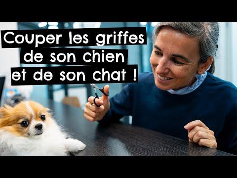 Couper les griffes de son chien ou chat! Service disponible à la clinique vétérinaire Ouest My Vet
