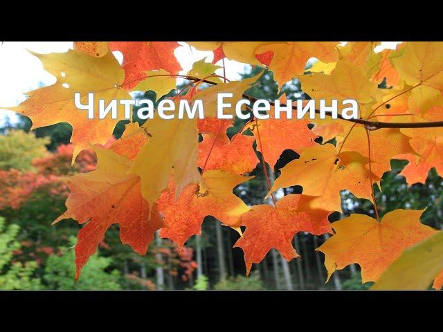 Изображение предпросмотра прочтения – ВераКалинина читает произведение «Хороша была Танюша» С.А.Есенина