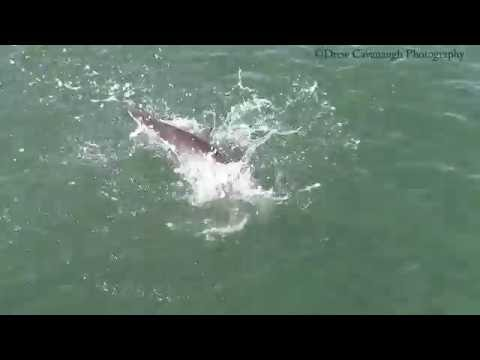 Shark Fishing New Smyrna Beach Ponce Inlet Florida