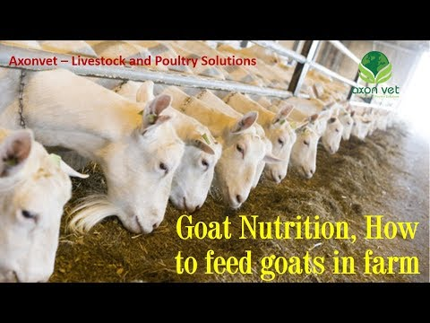 Goat Nutrition - How to feed farm goats - Practical Feeding of Goats - Livestock Production - 005