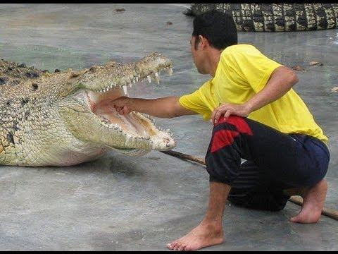 Taman buaya / crocodile farm langkawi