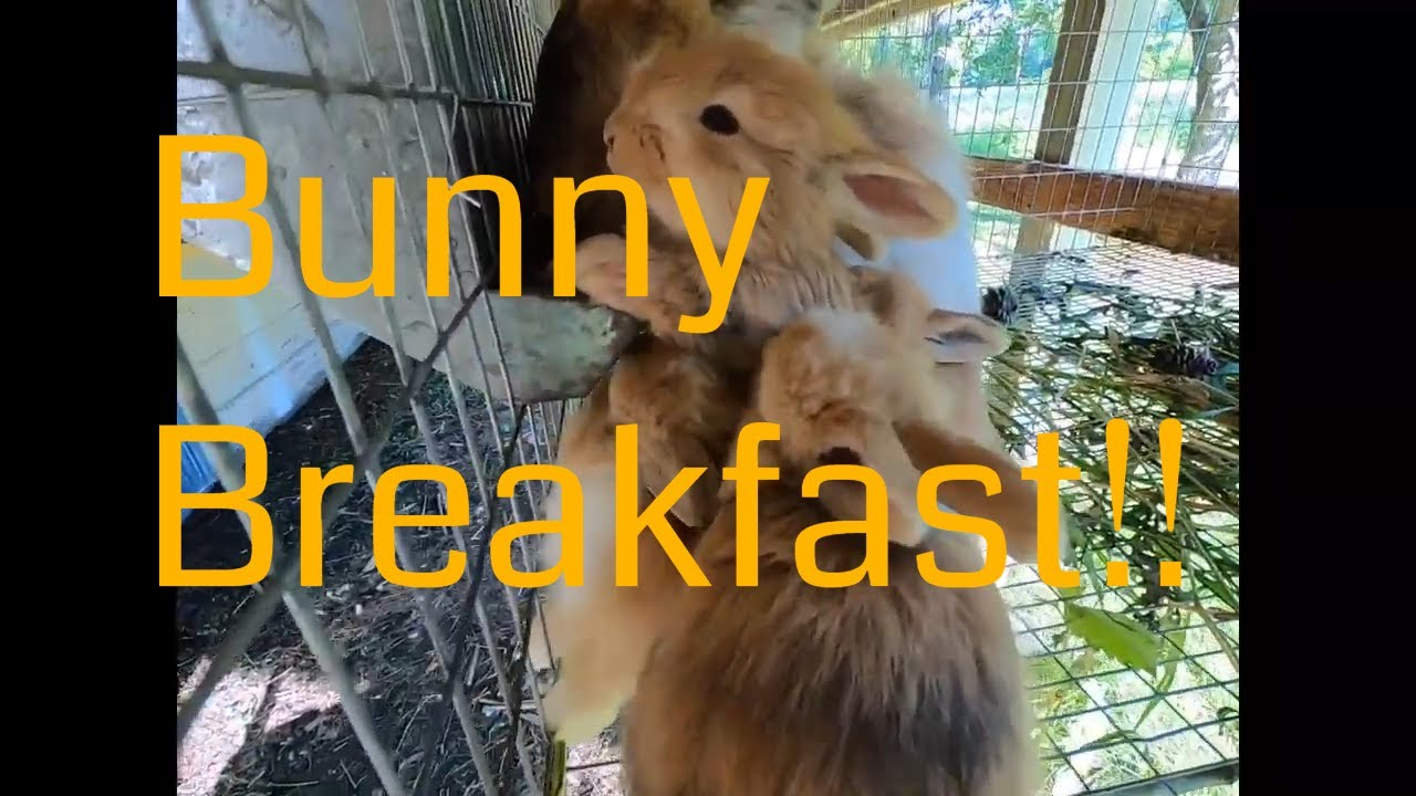 Breakfast with the bunnies. What healthy chewing looks and sounds like.
