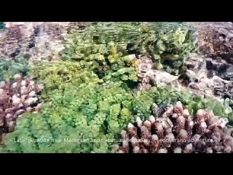 SEAWEEDS ADVENTURING : The Philippines