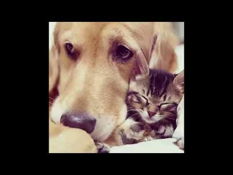 Just for Laugh| funny dog and cat| cats and dogs why can't we be friends
