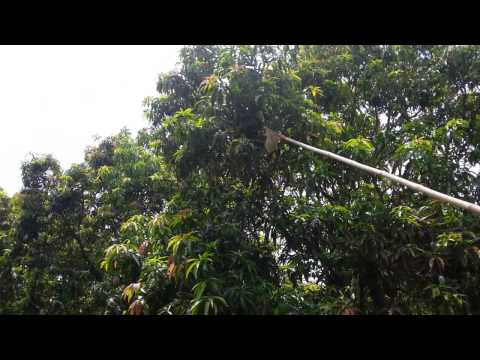 Mango Harvesting Tools by Jay Shree Dies & Components, Ahmedabad