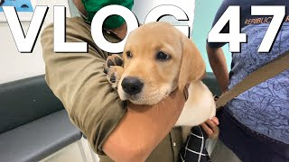 HAD TO TAKE HIM TO THE VET - VLOG 47