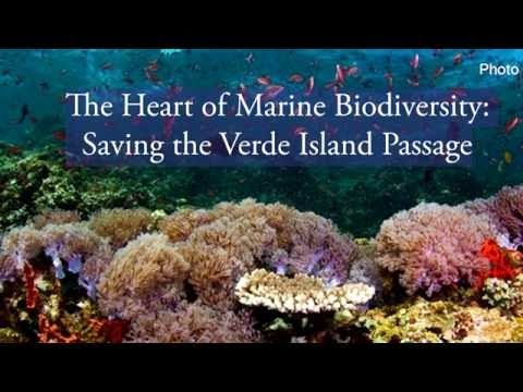 The Heart of Marine Biodiversity  Saving the Verde Island Pa