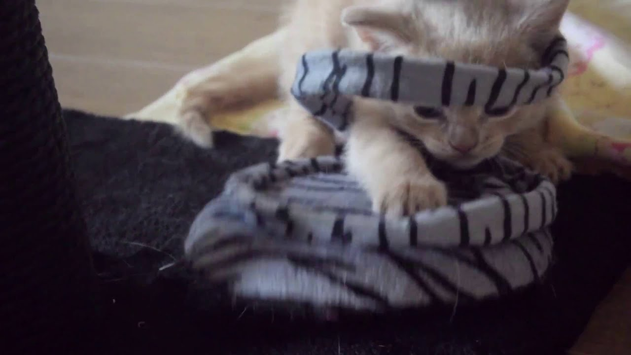 Mother Cat Play Fighting Kittens