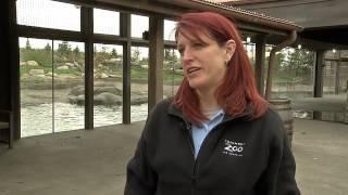 Columbus Zoo Uses Beagle To Test For Polar Bear Pregnancies