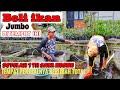 Berkunjung Ke Rumah Penjual Ikan Koi Dan Aneka Ikan Hias Banyak Kolam Ikan Di Rumah Ini  Mp3 - Mp4 Download