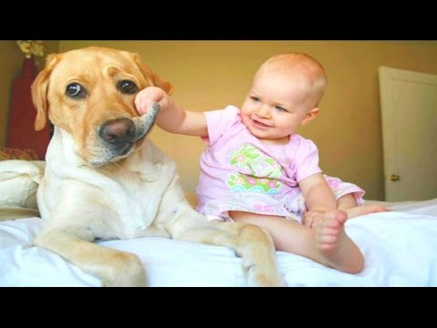 top-10-dog-for-kids---best-big-dogs