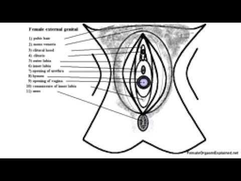 cum shot leg breast gif