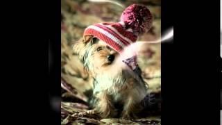 купить  шапки для собак