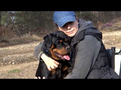 Rottweilers puppies 7 months old!!!EXTREME STRONG BONES!!!!