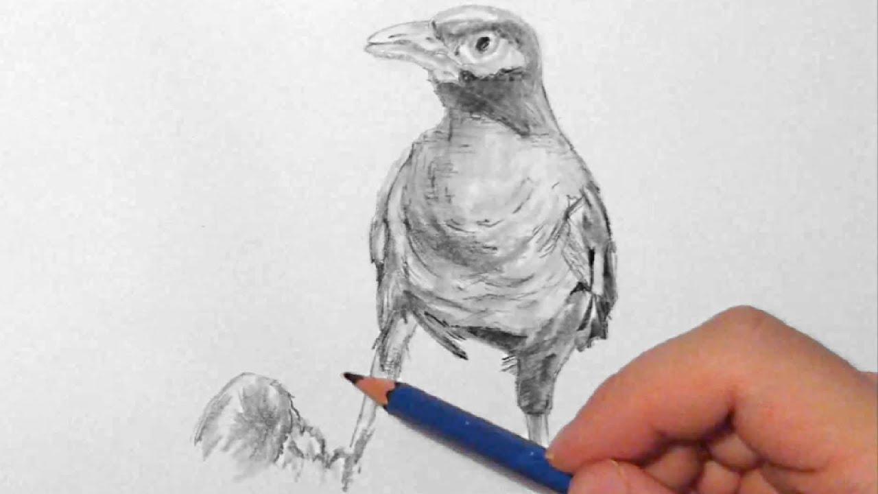 vogel zeichnen im zeitraffer bird drawing in fast motion youtube. Black Bedroom Furniture Sets. Home Design Ideas