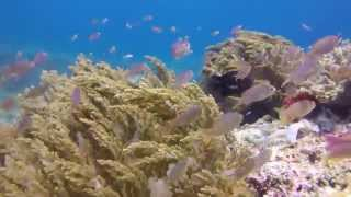 Raja Ampat Liveaboard, West Papua, Indonesia, Scuba Diving February 2015 with Wicked Diving HD