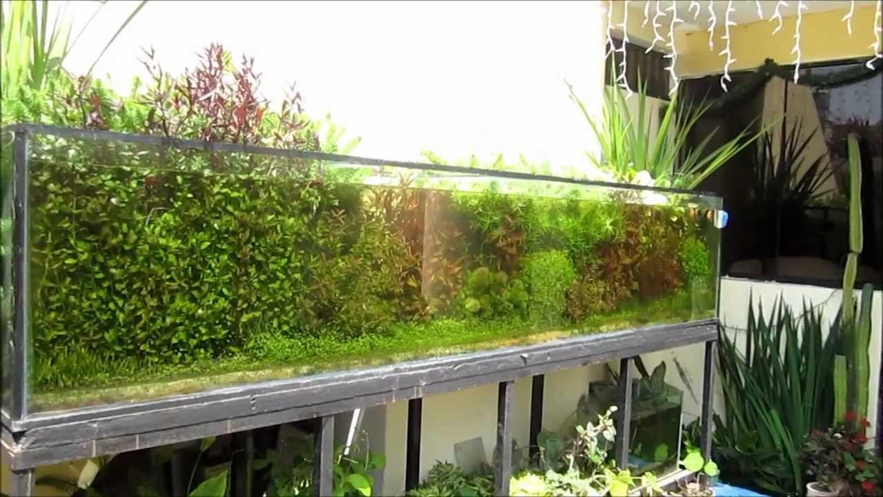 Acuario plantado al sol 900 litros youtube for Peceras de jardin