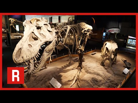 EPIC DINOSAUR SKELETON! | Royal Tyrrell Museum of Paleontology
