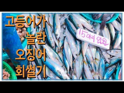 [VLOG]주문진 오징어 회썰기