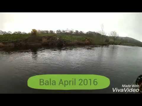 Fly Fishing Bala April 2016