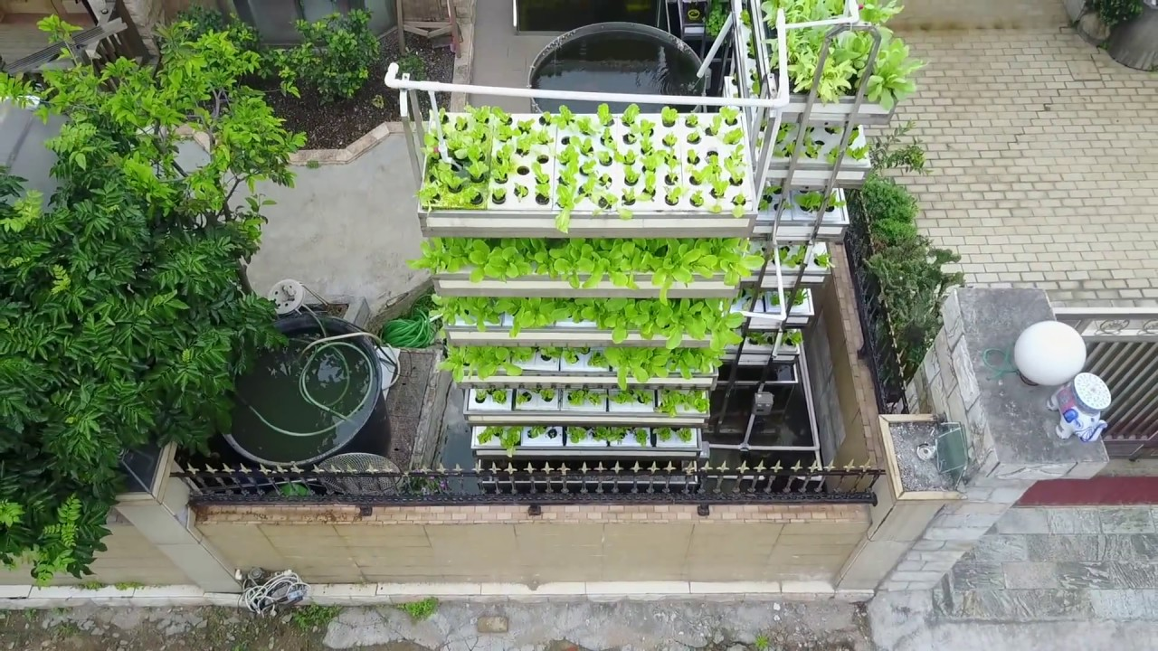 Aquaponics Garden Home Growing System Solution 20170516