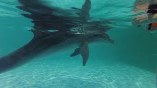 Лазаревское: Плавание с дельфинами и катание на лошадях