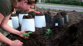 Minnesota  EXTREME  Gardening