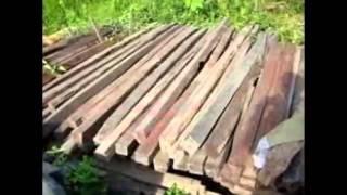 Pusat Jual Kayu Jati, Kayu Kamper, Kayu Meranti, Kayu Racuk, Kayu Borneo