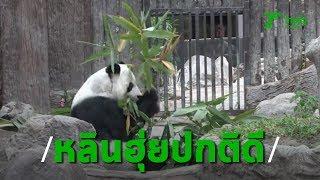หลินฮุ่ย นั่งกินไผ่ไร้กังวล ครูเผยหากแพนด้ากลับจีนแล้วเด็กๆ จะดูอะไร   Thairath online