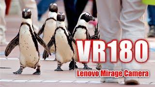 アドベンチャーワールド #ペンギン #VR180.