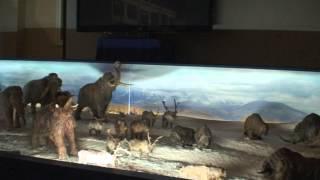Ледниковый период 2014 (мамонты, саблезубые тигры, пещерные медведи, овцебыки и др. на ВДНХ)