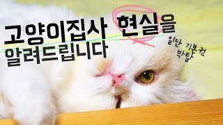 고양이 입양 말리는 이유!! 영상 보고 결정하세요 제발 (Eng)