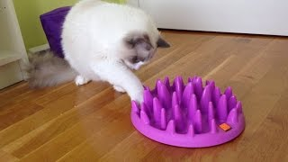 First experience with Interactive Cat Feeder :)