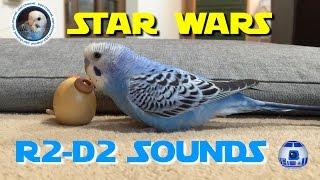 スターウォーズのR2-D2をマネするおしゃべり�...
