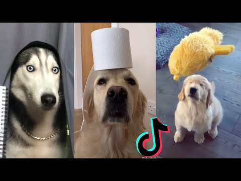 Funny Dogs of TikTok ~ Doggos Doing Funny Things TIK TOK ~ 2020