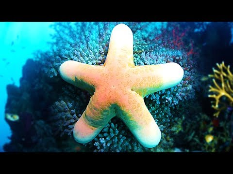 Do Starfish Have Eyes?