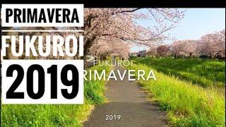 Primavera Fukuroi-shi Japão