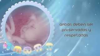 25 De Marzo: Día Del Niño Por Nacer