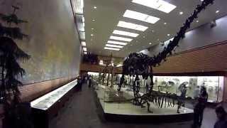 """видео Экскурсия """"В мире древних животных"""" в Дарвиновском музее"""