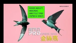 SWIFTLET PRO EXPRESS VOICE | SUARA PANGGIL WALET ORIGINAL HQ-001