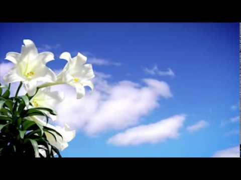 Worship Background Video - Easter - YouTube