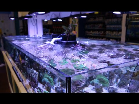 Neptunes Reef  [Local Fish Store Travel Ep. 9]