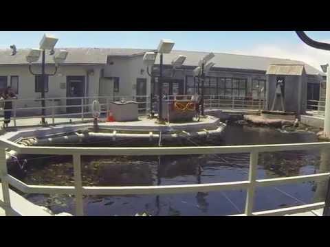 Monterey Bay, California, Aquarium