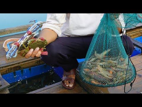 阿兴又来收大网,拉上好几斤野生海虾,拿到市场能卖几百块